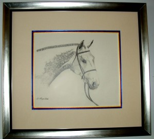 Horse portrait with show ribbon fillet